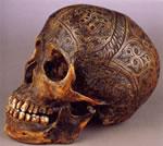 Dayak Skull